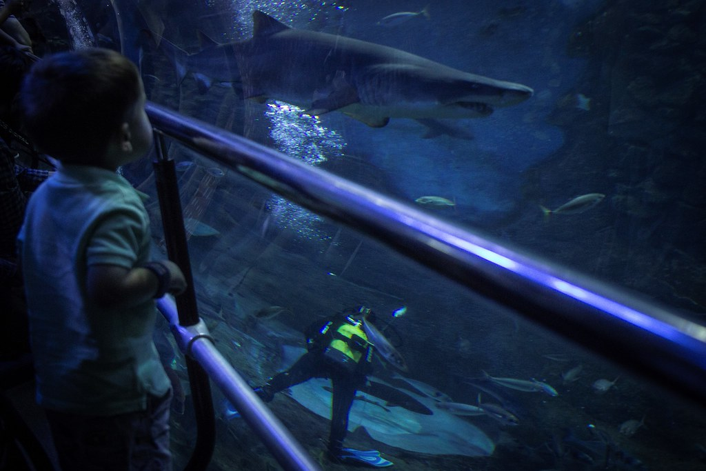 5.- Aquarium Donostia