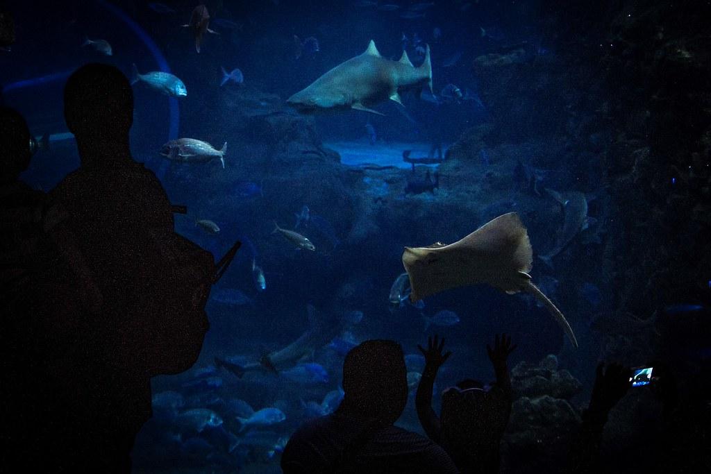 3.- Aquarium Donostia