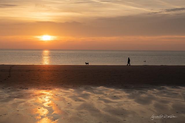 Dog walk on beach