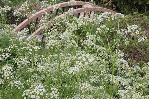 Plant covered old mini bridge.