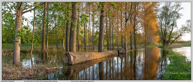 Bois inondés , Munchausen , Alsace 016
