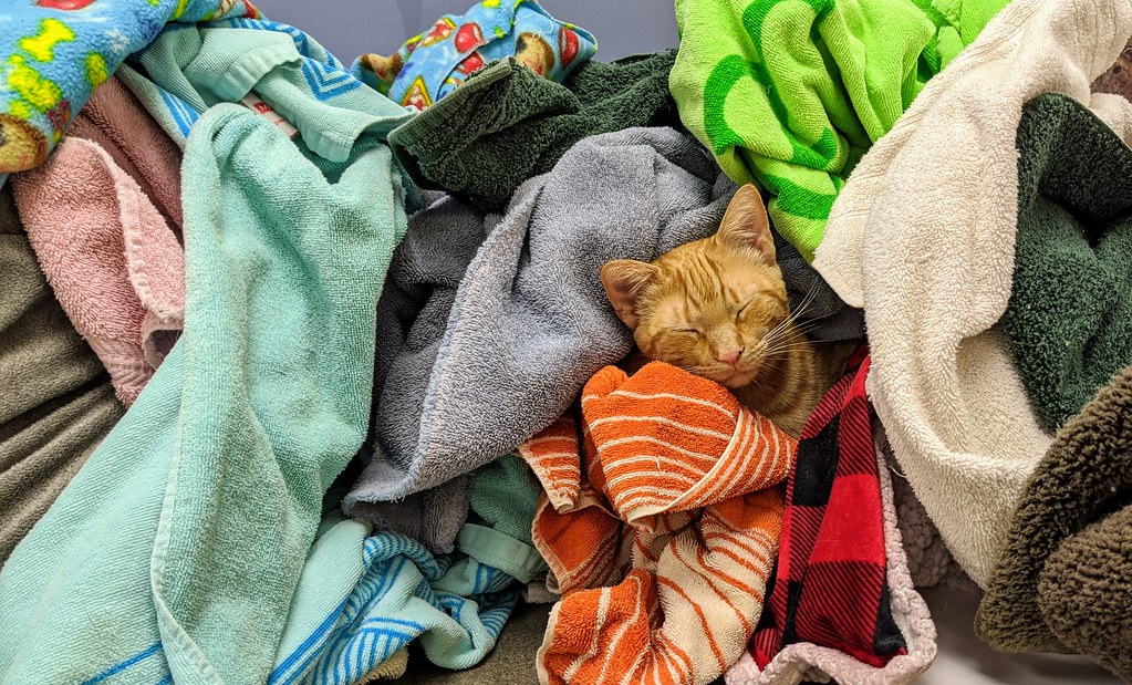 Pile of unfolded laundry with a cat sleeping in the middle of it.