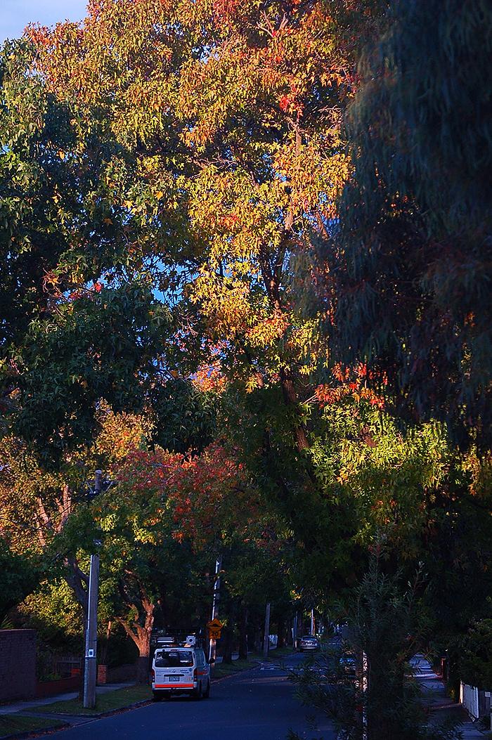 _autumn_st_