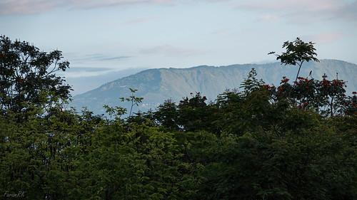 dowhill giddapahar hills kurseong morninglight mountain siliguri westbengal india
