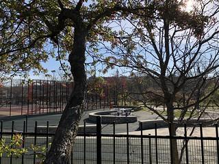 JacksonSquare_Garden_April29_FortHill_View_CrabApples