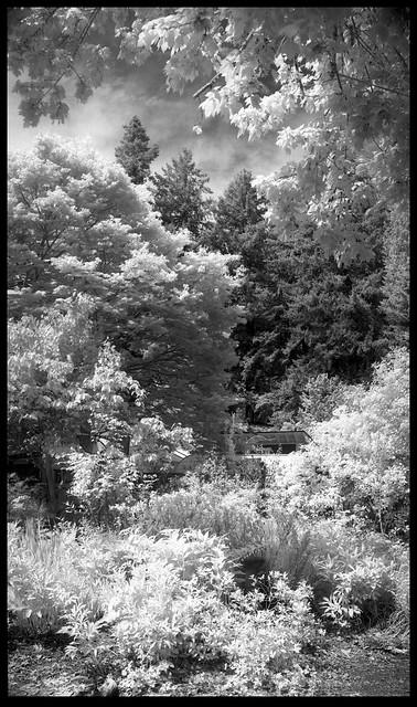 Backyard Trees 20042006v07