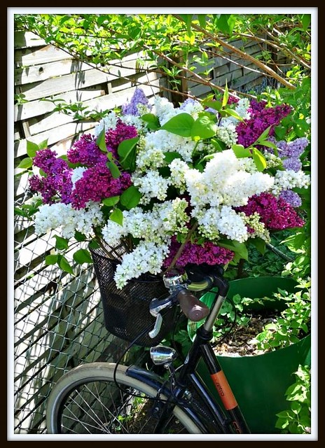 Flowery bike  (explored 02/05/2020)