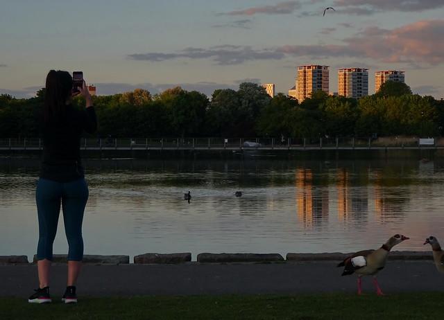 Ignoring the Squabbling Egyptian Geese, A Photo Across Burgess Park Lake at Dusk - - Corona Virus London Lockdown Photo Journal DSC07748