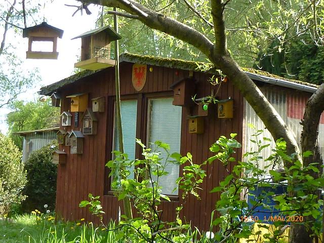 193 , Snapshot - Bird , my garden