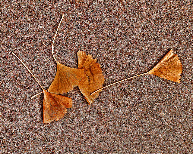 ginkgo leaves on sidewalk
