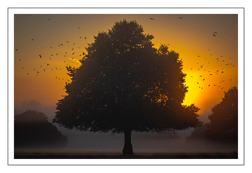 sunrise tree richmondpark richmond london england 2019 landscape photography canoneos7dmkii canon canonf46f56islusm100400mm canon100400mmf4556lisusmmkii planemotorsport2020