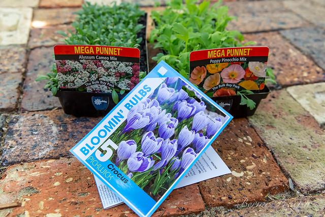 SPRING FLOWERS-5220
