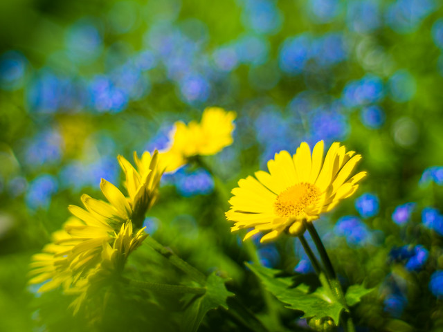 some yellow, some blue, some green...