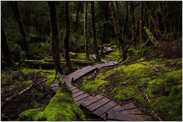 Dark Forest IV