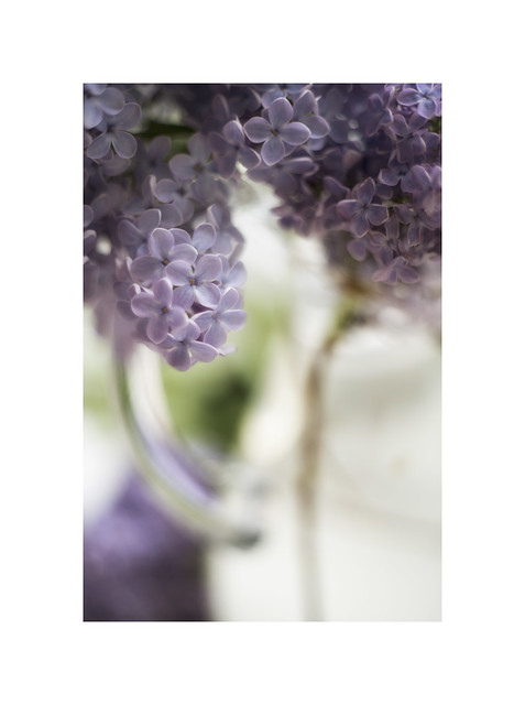 Vase of Lilac...