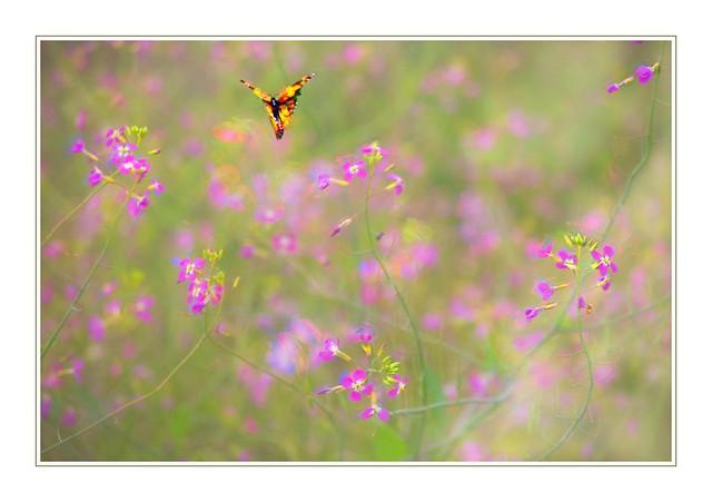 Elusive Butterfly of Love