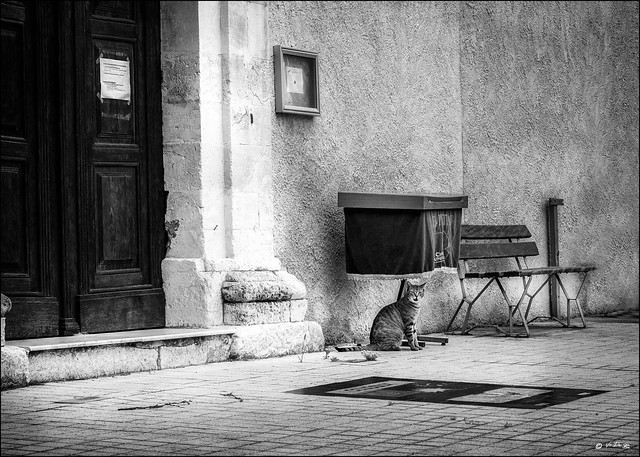 Covid19: L'Eglise est fermée, le chat en garde la porte... / The Church is closed, the cat guards the door...