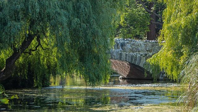 Weeping Willows, Beacon Hill Park Bridge