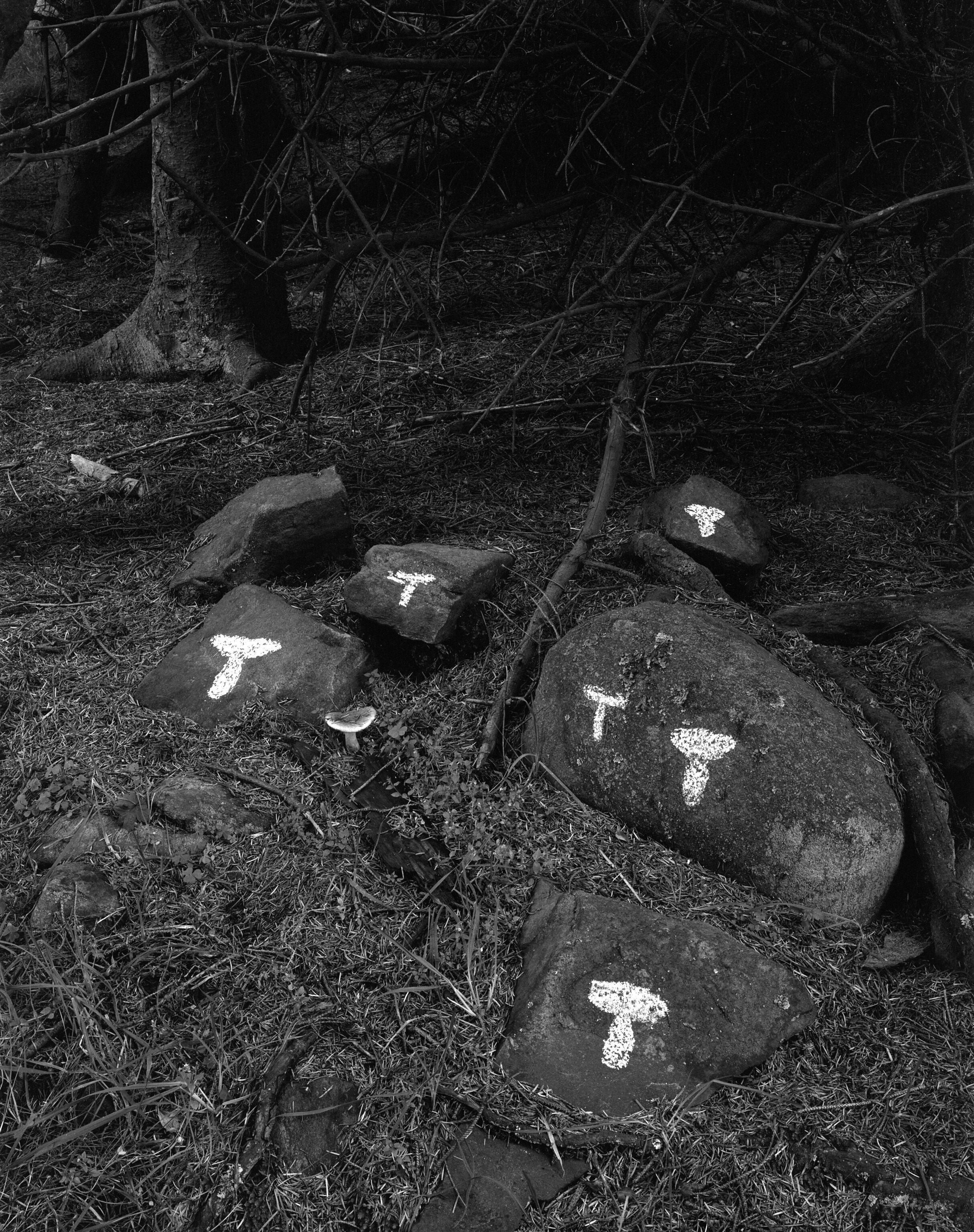 Mushrooms drawn on Rock with chalk