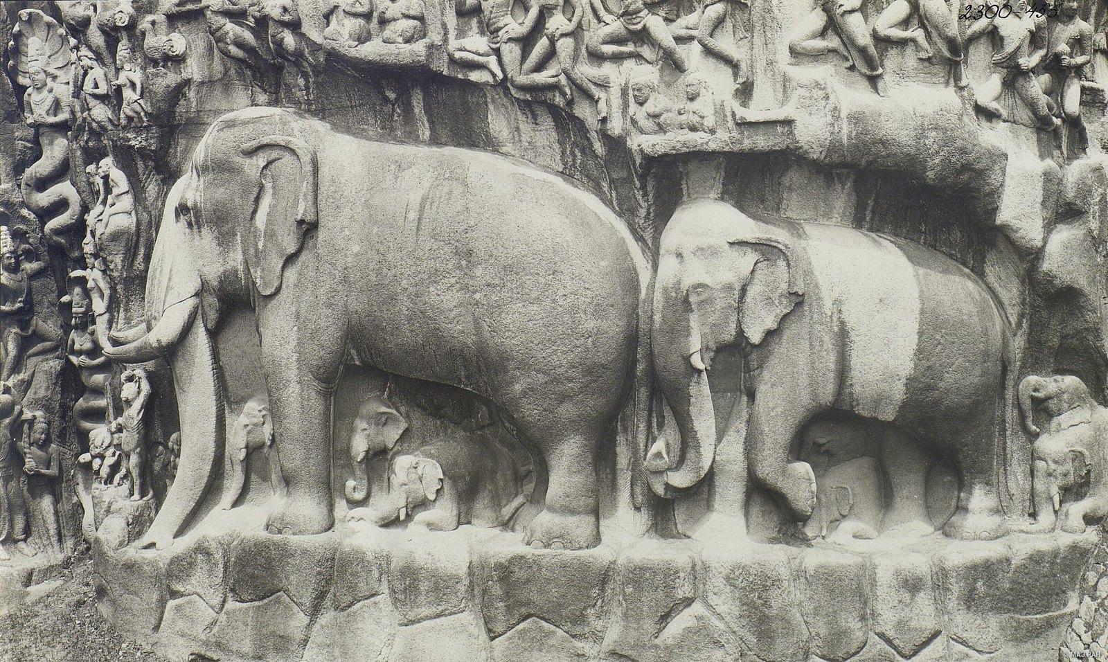 Мамаллапур (деталь рельефа со слонами на скале) (4)