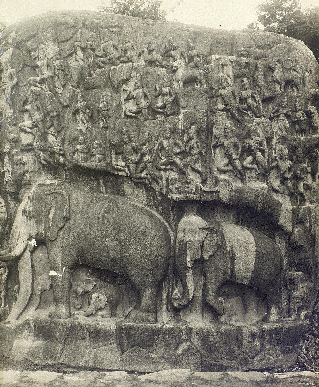 Мамаллапур (деталь рельефа со слонами на скале) (3)