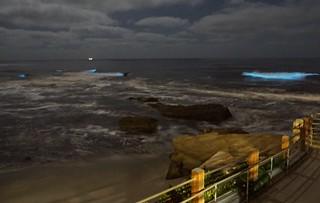 Bioluminescent waves in La Jolla, California