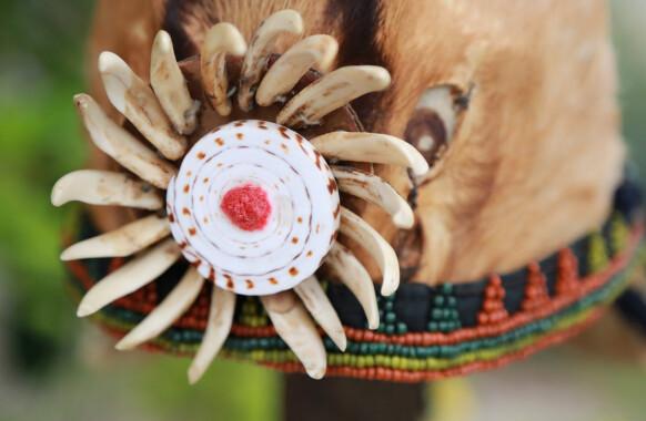 用山羌牙齒做的裝飾物,對原住民而言有其蘊含的文化意義。圖/取自台灣新聞動物網
