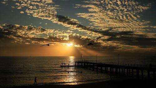 sunset coogee beach sun golden