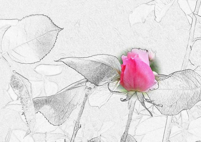 Una flor para ELLAS.