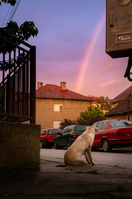 Contemplating dog