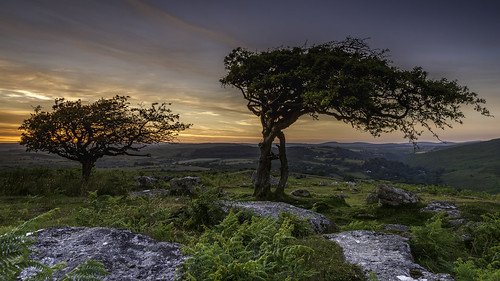dartmoor dartmoornationalpark combestonetor trees sunset sky scenic tranquill