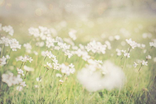 .Every flowers in the meadow seemed to be dancing.