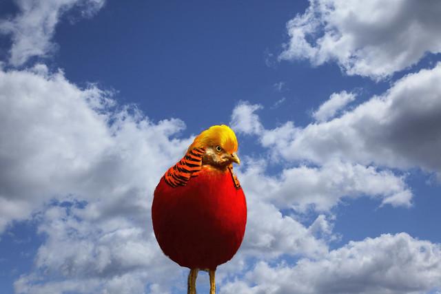 Red Orange Bird
