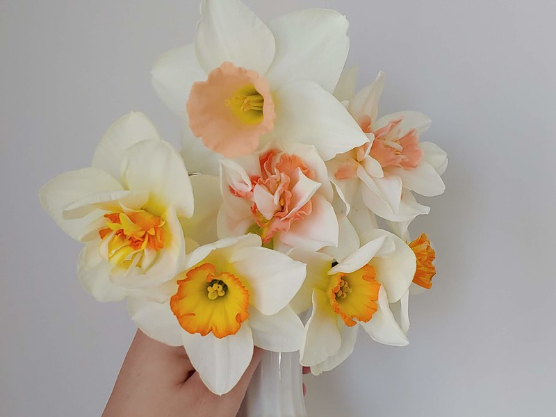 Daffodils, Part 2