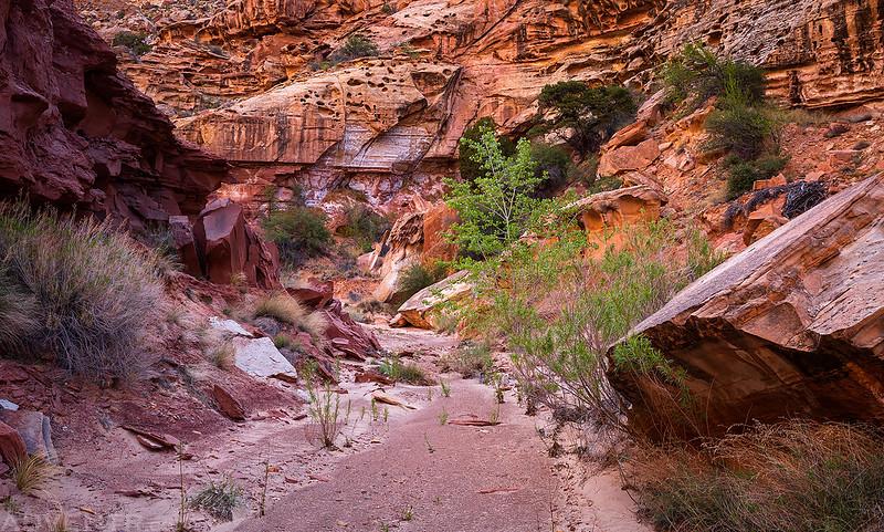 Canyon Walking