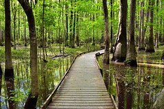 It Only Takes a Moment or Step to Start the Story We Call Life… (Congaree National Park)