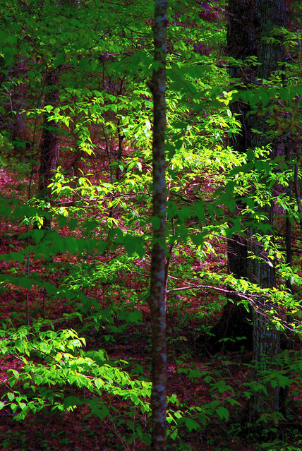 Light And Shadow in The Forest