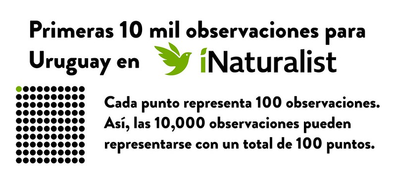 Intro 10 mil primers Observaciones en iNaturalist en Uruguay
