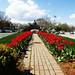 rockery_tulips050420