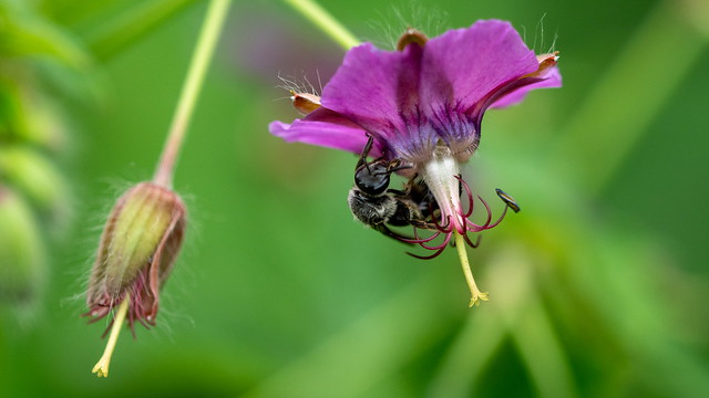 Bee at work 2