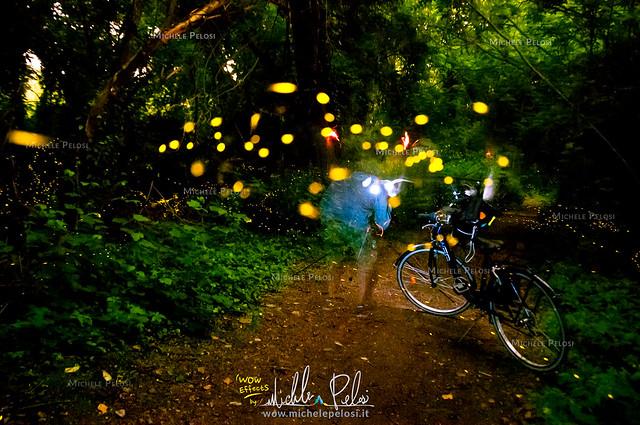 Fotografi alla ricerca della magica bioluminescenza delle lucciole. Giugno 2019 Escursione fotografica naturalistica in bicicletta nel Parco delle Cave di Milano tra le edizioni annuali delle Lusiroeule, le passeggiate serali organizzate da  Gianni Bianch
