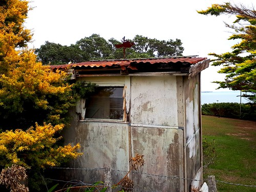 newzealand auckland pohutukawacoast beachlands old building shed trees yellow green rustic rust water sea view
