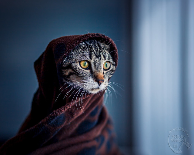 Meow the Fourth be with you!