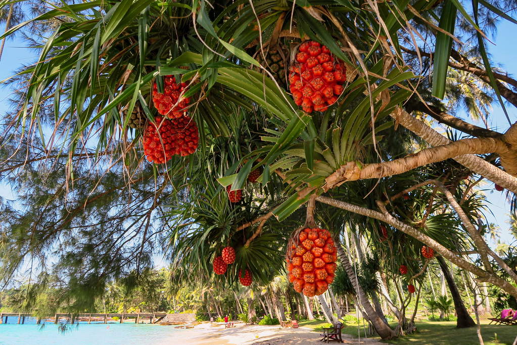 Weird tropical fruits in trees