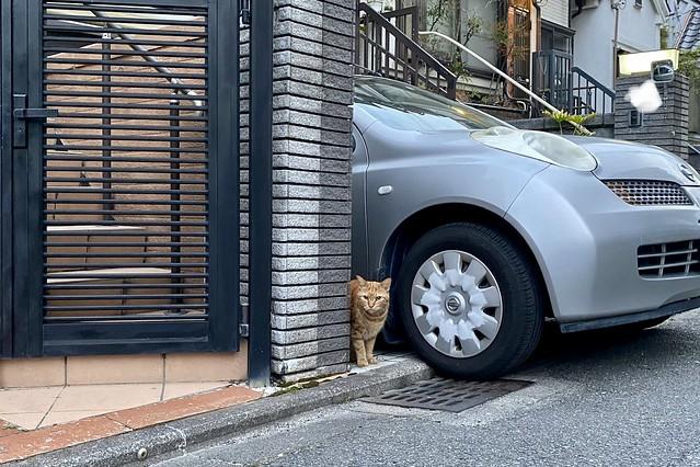 Today's Cat@2020ー05ー05