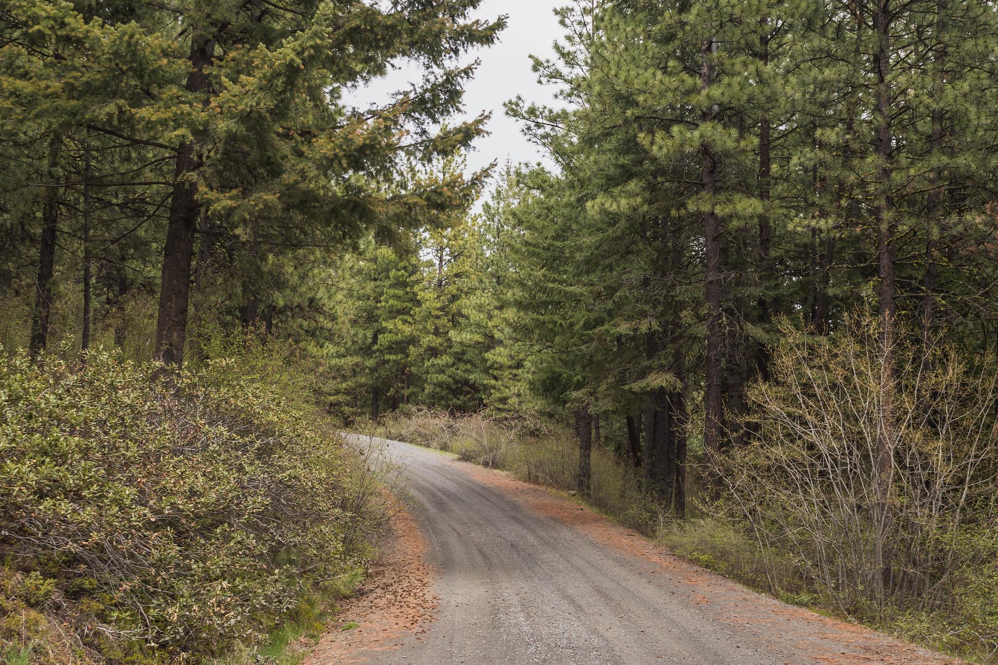 A brief road walk