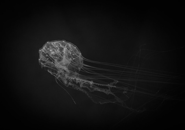 The Slow Dance of the Jellyfish