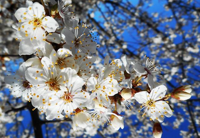 Beautiful sunny spring 06