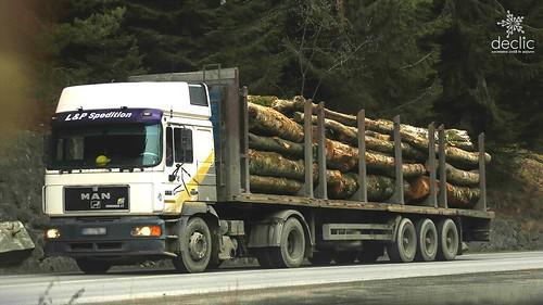 Lege pentru pădure, nu pentru hoți.