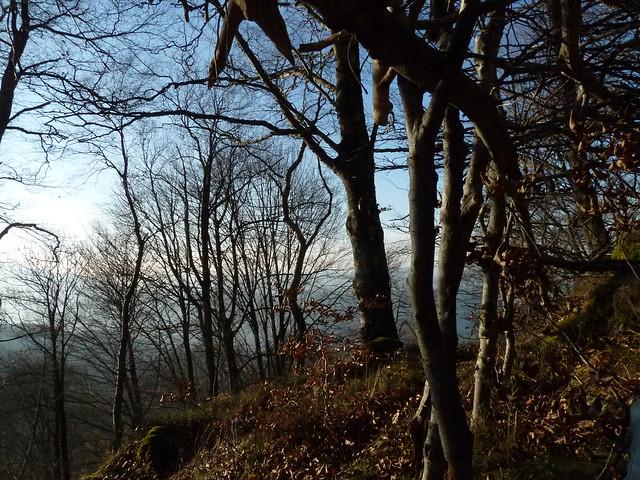 15/01/2012 la forêt du col de Larrieu